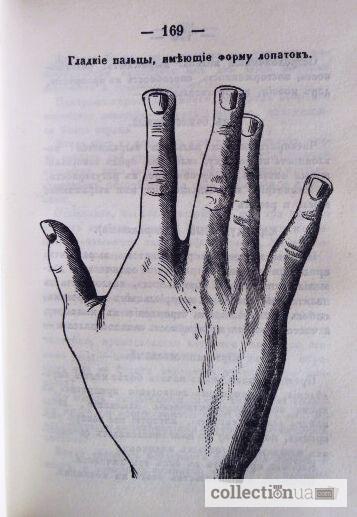 моим тайна руки в картинках животных кормов