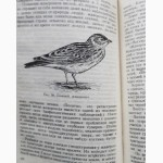Бёме. Певчие птицы. 1952г