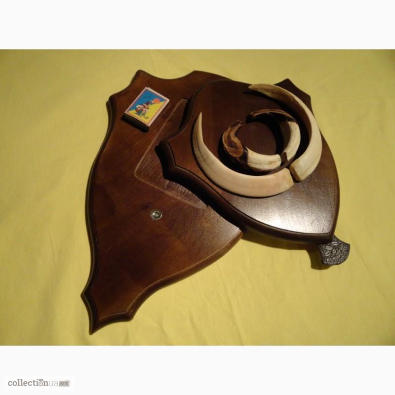 Фото 8. Охотничий трофей - клыки кабана СЕКАЧА, на 2-ном медальоне