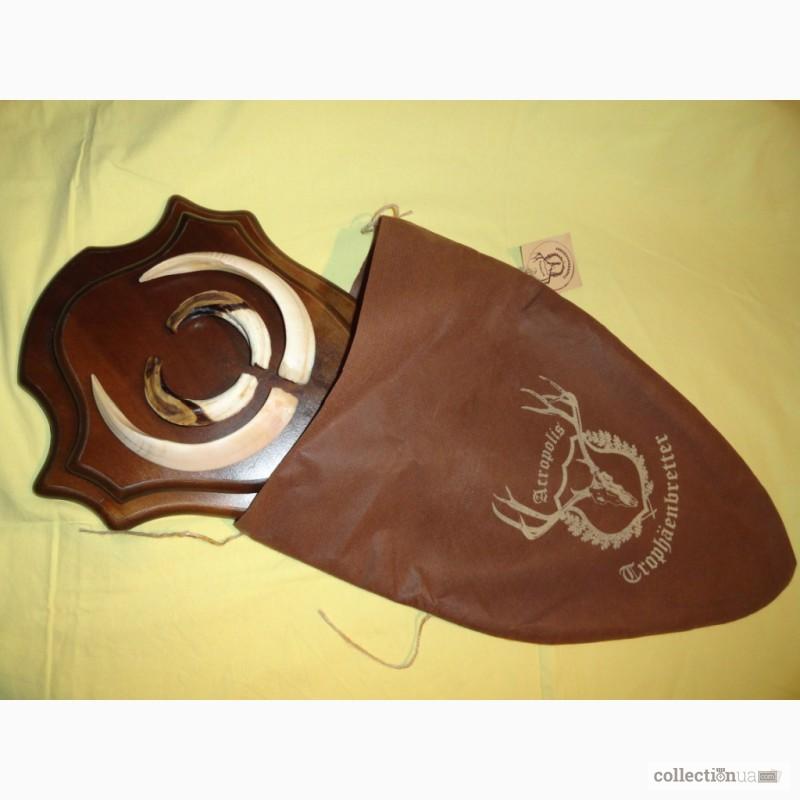 Фото 2. Охотничий трофей - клыки кабана СЕКАЧА, на 2-ном медальоне
