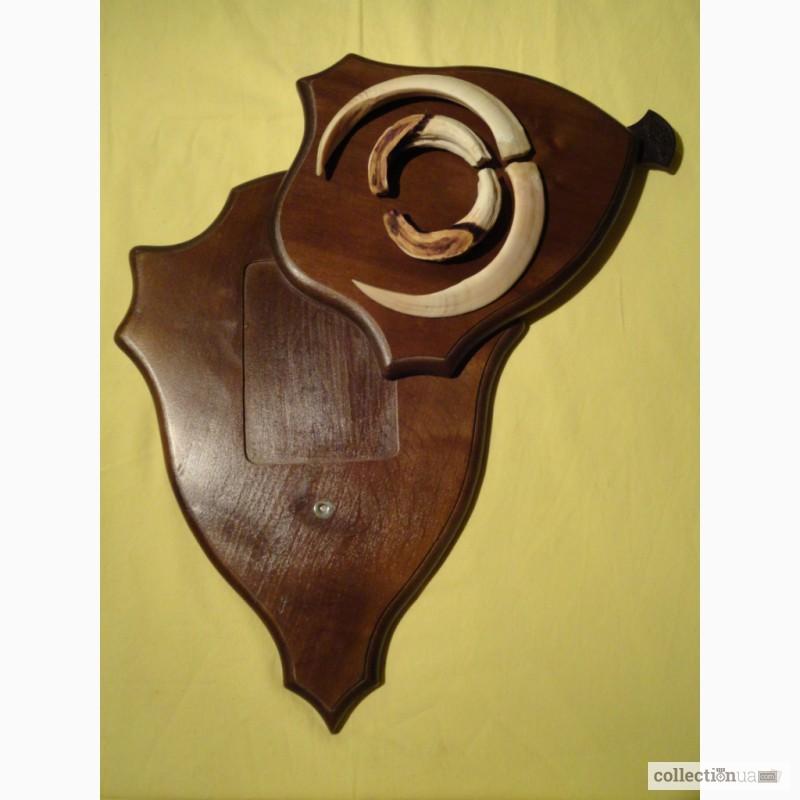Фото 7. Охотничий трофей - клыки кабана СЕКАЧА, на 2-ном медальоне